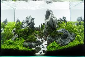 Planted Tank Peaks By Roman Holba - Aquascape Awards | Aqua ... My Life Story Aquascape Gallery Aquascapes Pinterest Aquascaping Live 2016 Small Planted Tanks The Surreal Submarine World Of Amuse Category Archives Professional Tank Enchanted Forest By Tommy Vestlie Aquarium Design Contest Awards 100 Ideas Aquariums Fish Tanks And Vivarium Avatar Fish Tank Google Search Design Aquascape Ada Aquascaping Contest Homedesignpicturewin Award Wning Amenagementlegocom Legendary Aquarist Takashi Amano Architecture