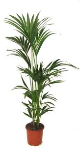 plante d駱olluante bureau plantes dépolluantes dépollution de l air intérieur par les