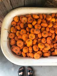 Pumpkin Patch Near Des Moines by Blog Libbie Bond