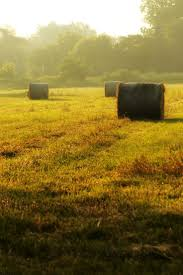 138 Best Hay Fields Images On Pinterest | Fields, Hay Bales And ... Hay Day Android Apps On Google Play Best 25 Bale Pictures Ideas Pinterest Senior Pic Poses Affirmations For Sinus Problems Louise Law Of Attraction Farm Crew With Steam Tractor Hay Baler And Wagon Photographer Cute Bales Rustic Outdoor Parties Ludacris Whats Your Fantasy Lyrics Genius Barn Party Decorations