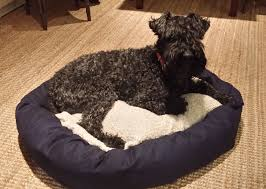 Trusty Pup Dog Bed by What Kind Of Dog Bed Should I Get For My Dog