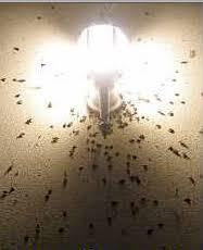 do yellow light bulbs really keep bugs away pest cemetery