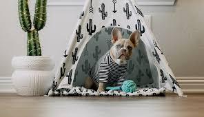 ratgeber hundehütte möglichkeiten indoor und outdoor