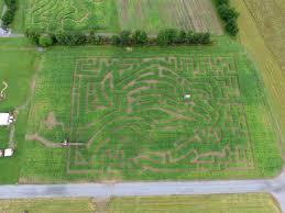 Christmas Tree Farms Albany Ny by New York U0027s Best Corn Maze The Amazing Maize Maze Is A Great Fun