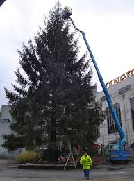 Christmas Tree 75 Ft by 56 Best Christmas Images On Pinterest Christmas Christmas