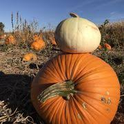 Mccalls Pumpkin Patch Albuquerque Nm by Mccall Pumpkin Patch 110 Fotos Y 37 Reseñas Plantaciones De