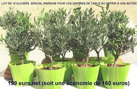 acheter un olivier de provence vente d oliviers en ligne mon