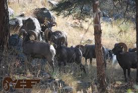 Shed Hunting Utah 2014 by Dwr Bringing Big Changes To 2016 Big Game Hunting In Utah Huntin