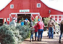 Cartner Christmas Tree Farm by Gallery Of The Real Christmas Tree Farm Fabulous Homes Interior