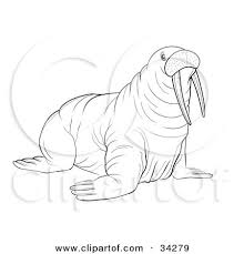 Clipart Illustration of a Black And White Outline A Big Walrus