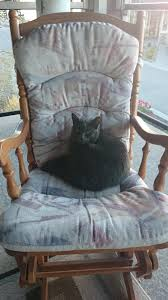 My 9 Year Old Cat Loves Her Rocking Chair | Old Cats, Cat ...