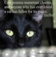 cat quotes 182 best lovely quotes and sayings about cats images on