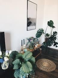 living plants pflanzen cozy wohnzimmer deko i