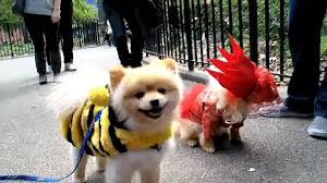 Tompkins Square Halloween Dog Parade by Tompkins Square Park Halloween Dog Parade Youtube