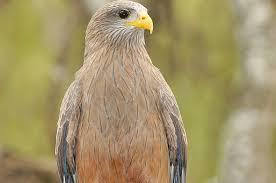 Kruger Park Birding