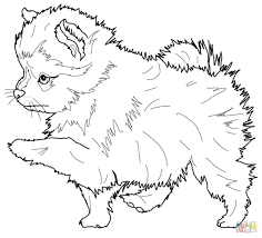 Pomeranian Kawaii Coloring Page Printable Download Free Realistic Puppy Pages