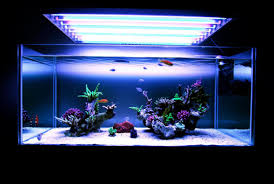 Minimalist Aquascaping | Page 3 | REEF2REEF Saltwater And Reef ... Is This Aquascape Ok Aquarium Advice Forum Community Reefcleaners Rock Aquascaping Contest Live Rocks In Your Saltwater Post Your Modern Aquascape Reef Central Online There A Science To Live Rock Sanctuary 90 Gallon Build Update 9 Youtube Page 3 The Tank Show Skills 16 How Care What Makes Great Large Custom Living Coral Aquariums Nyc