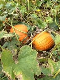 Pumpkin Patch Pittsburgh 2015 by 71 Best Pittsburgh With Kids Images On Pinterest Pennsylvania