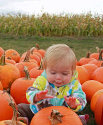 Canby Pumpkin Patch by Fall Fests For The Entire Family Willamette Valley Visitors