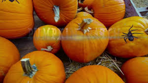 Pumpkin Farms In Wisconsin Dells by Halloween Time At Mt Olympus Resorts Youtube