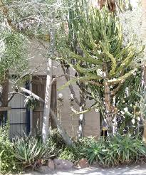 field trip • moorten botanical garden pamgarrison