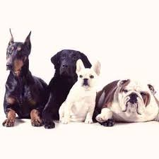 List Of Dogs That Shed Hair by Excessive Dog Shedding When You Should Worry Petcarerx