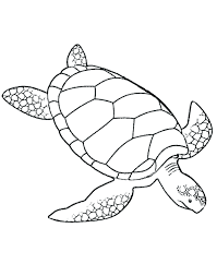 Printable Turtle Coloring Pages For Adults Free Ninja Pictures Easy Full Size