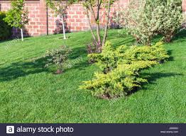 Decorative Bushes And Trees On Manicured Lawn On Backyard Of ... Garden Design With Backyard Landscaping Trees Backyard Fruit Trees In New Orleans Summer Green Thumb Images With Pnic Park Area Woods Table Stock Photo 32 Brilliant Tree Ideas Landscaping Waterfall Pond Stock Photo For The Ipirations Shejunks Backyards Terrific 31 Good Evergreen Splendid Grass Scenic Touch Forest Monochrome Sumrtime Decorating Bird Bath Fountain And Lattice Large And Beautiful Photos To Select Best For