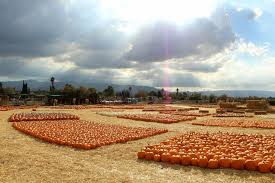 San Jose Pumpkin Patch 2017 by Jacobs Farms Pumpkin Patches 5285 Snell Ave Blossom Valley