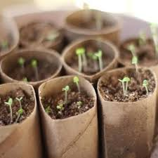Composting Seed Start Containers Made From Toilet Paper Rolls With Things To Make Out Of Towel