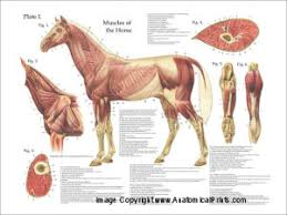 DOWNLOAD SAUNDERS VETERINARY ANATOMY COLORING BOOK 1E PDFThis Pdf Ebook Is One Of Digital Edition The Horse Color Atlas