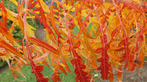 Maine Home Garden News - Cooperative Extension: Garden & Yard ... Maine Fiberarts Fiber Art Calling Lobster Archives New England Today Goodbye Itchy Sweaters Hello Sheep Sunshine And Seawater Francis Flisiuk The Portland Phoenix Bangor Daily News Bdn Magazine October 2017 By Issuu 25 Unique I 94 Number Ideas On Pinterest Bts Members Age Bulletin Clandeboye Courtyard Estate Co Down List Of Vendors Fniture Store Living Room Buy Ply Locally Events One Lupine Artsmaine Yarn Supply