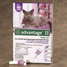 flea treatment for cats flea treatment for cats ticks