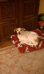 Bowser Dog Beds by 246 Best Dog Bed Images On Pinterest Pet Beds Dog Beds And Dog