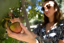 Oak Glen Pumpkin Patch Yucaipa by Autumn Events To Fall Into U2014 The Corsair