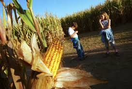 Closest Pumpkin Patch To Atlanta by Best Corn Mazes Near Los Angeles Cbs Los Angeles
