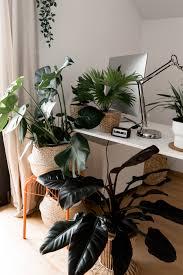 mit grünen zimmerpflanzen eine tolle oase schaffen der