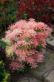 Orleans Effusion Lamp Oil by 414 Best Plant And Garden Colours Red Images On Pinterest