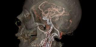 interieur corps humain femme en images le corps humain comme vous ne l avez jamais vu