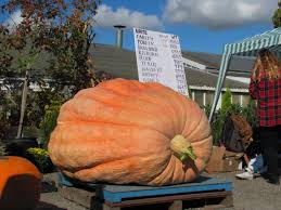 Largest Pumpkin Contest Winners by 2015 U2013 Giant Pumpkins British Columbia