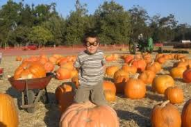 Pick Of The Patch Pumpkins Santa Clara by Sanjose Com The Great Bay Area Pumpkin Patch List