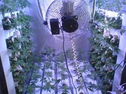 chambre de culture cannabis complete culture vertical dans room 120cm 85 boutures qu en pensez