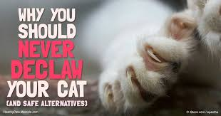 cost to declaw cat declawing cats the safer alternative