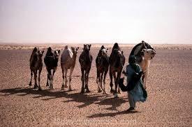 Tuareg Nomad And Camel Train Sahara Desert Niger Algeria Border Region West Africa