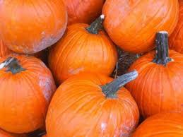 Pumpkin Patch Massachusetts by Patch Picks For Picking A Pumpkin Newton Ma Patch