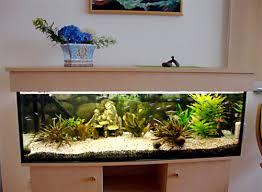 das aquarium im wohnzimmer der palliativstation verein zur