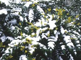 Plant A Winter Garden | HGTV 484 Best Gardening Ideas Images On Pinterest Garden Tips Best 25 Winter Greenhouse Ideas Vegetables Seed Saving Caleb Warnock 9781462113422 Amazoncom Books Small Patio Urban Backyard Slide Landscaping Designs Renaissance With Greenhouse Design Pafighting Fall Lawn Uamp Gardening The Year Round Harvest Trending Vegetable This Is What Buy Vegetables Fresh And Simple In Any Plants Home Ipirations