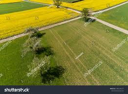 100 Birdview Field Rapeseed Stock Photo Edit Now 1086124277