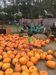 Ms Heathers Pumpkin Patch Louisiana by Nature Trail Mrs Heather U0027s Pumpkin Patch Yelp