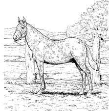 Gallery Of Running Arabian Horse Coloring Page Realistic Pages Printable 2